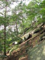 Národní přírodní památka Borový
