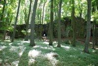 Zalesněný vrcho Přírodní rezervace Průchodnice