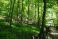 Národní přírodní rezervace Hůrka– polom