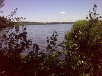 Pohled skrze břehový porost na Krvavý rybník