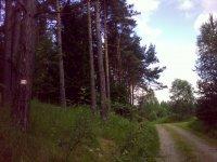 Chráněný borový les vPR Miletínky uobce Ktiš