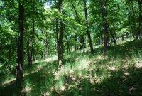 Přírodní rezervace Andělova zmola