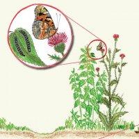 Nedopasky tvoří rostliny nebo keře, které pasoucím se zvířatům nechutnají nebo které mají různé trny, ostny nebo třeba kožovité listy a zvířata je proto nežerou. Na nedopascích se ale vyvíjí řada bezobratlých, ať už to jsou motýli, ploštice nebo třeba listožraví brouci. Proto je velkou chybou, když se nedopasky po pastvě pokosí.