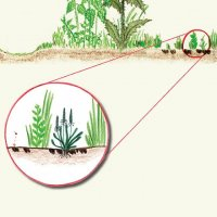 Vzapojeném travním drnu se neprosadí konkurenčně slabší druhy rostlin, které potřebují, aby je jiné rostliny netísnily. Pro ně je spásou pastva. Kopýtka vytvoří vtrávníku malé ostrůvky, malé jamky, které se stanou útočištěm nejen pro citlivější rostliny, ale ipro některé bezobratlé.
