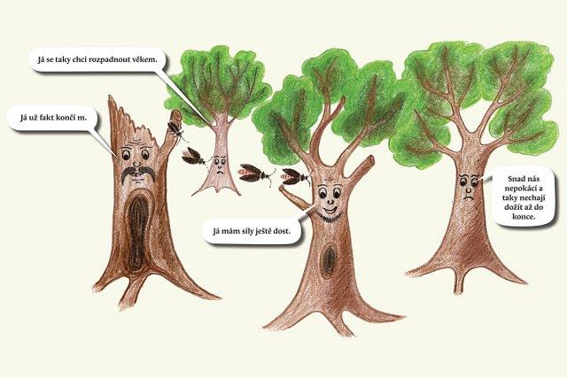 Proč mají brouci rádi osamocené stromy a aleje
