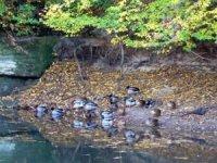 Břeh rybníka vBoreckých skalách
