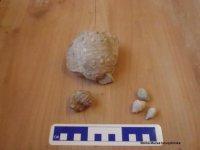 Zkamenělé ježovky a jejich ostny
