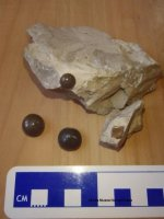 Zkamenělé knoflíkové zuby ryb Lepidotes maximus a rybíšupina