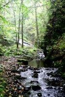 Bobří potok