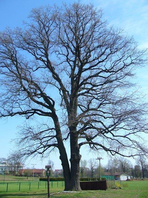 Chko poodří – památné stromy