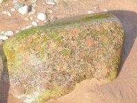 Bludný balvan severské žuly rapakivi na pobřeží Baltskéhomoře