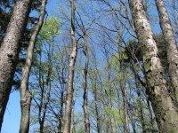 Veřovské vrchy– les