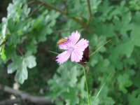 Rostlina a hmyz