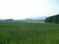 Polní ekosystém