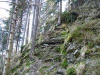 Lesy nad Moravicí