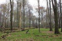 Černý les 1