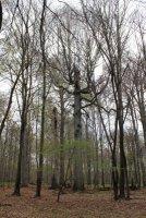 Černý les 2