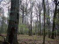 Černý les II.