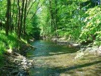 Řeka Hvozdnice