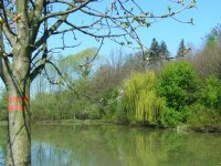 Rybníky vTrnávce