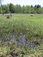 Skalské rašeliniště 1