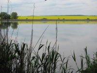 Velký Pavlovický rybník 1