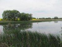Velký Pavlovický rybník 2