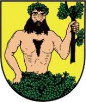Město Albrechtice